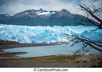 View from the shore to the glacier through the branches of the tree. Shevelev.