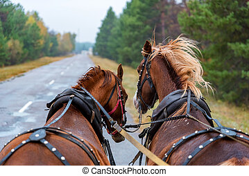 View from wagon of two horses in rig