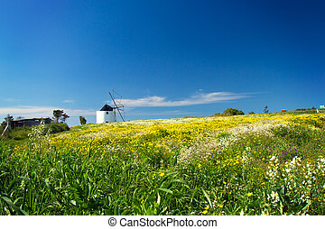 view mill in field with flowers, Portugal