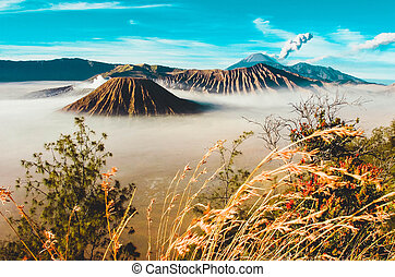 View mount Bromo Indonesia - The grass is growing against a ...