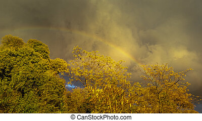 View of a beautiful rainbow from behind the trees