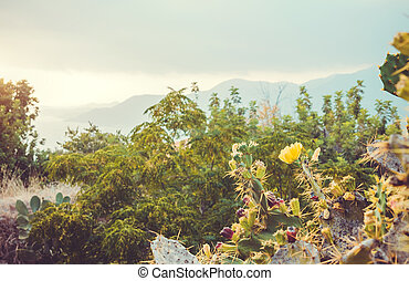 View of a beautiful tropical landscape through cactus