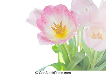 View of a bouquet of tulips on a white background.