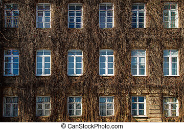 View of a brick wall with windows