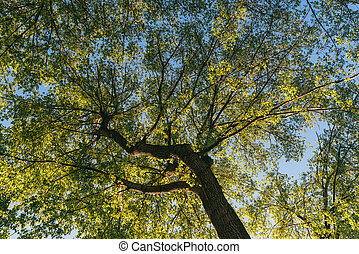 view of a bright green spring tree from bottom to top. Illuminated by the bright sun
