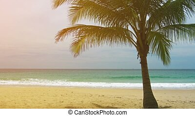 View of a deserted sandy beach with single palm tree