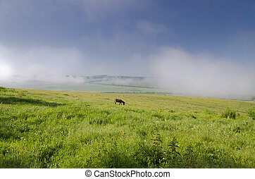View of a donkey grazing in the fields