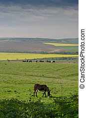 View of a donkey greasing in the fields