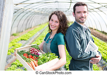 Farmer team at work in a greenhouse