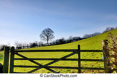 View of a field gate with tree