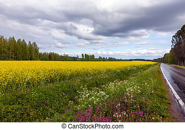 Field of Bright Yellow rapeseed in front of a forest