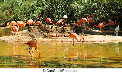 view of a group of pink Chilean flamingos