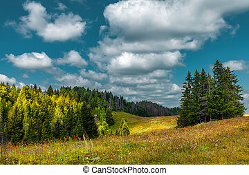 View of a hilly and woody landscape in sunny day with clouds in the sky