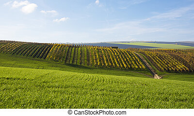 View of a landscape with a field and a vineyard in autumn in...