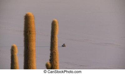 View of a Moving Car Behind Cacti, Uyuni, Bolivia