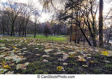 View of a Park in Autumn