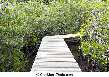 pier in a mangrove swamp