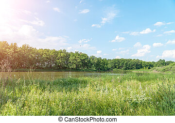 View of a small forest lake