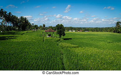 View of a small hut in rice-fields in Ubud, Bali, Indonesia.