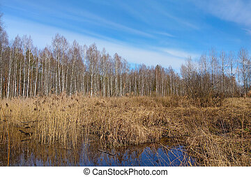 View of a small swamp in autumn.