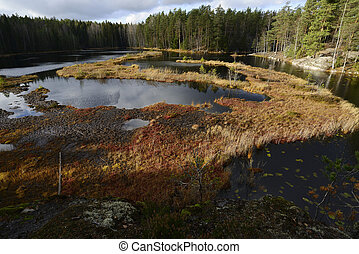 view of a swampy lake in autumn