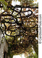 vineyard structure