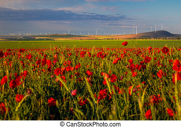 View of a wind turbines park in Constanta County, Romania with a poppy field in the foreground