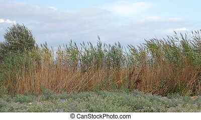 View of agricultural field with tall grass in windy weather...