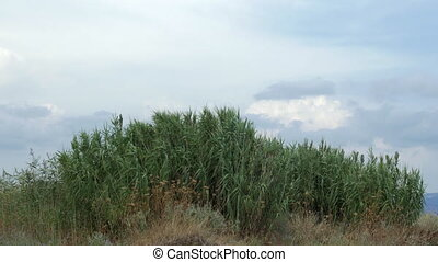 View of agricultural field with tall grass in windy weather at summer