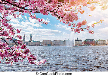view of Alster Lake in Hamburg framed by blooming cherry tree on beautiful sunny day in springtime