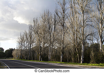 asphalt road with tall leafless trees