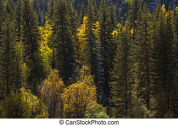 View of autumn forest in the Altai mountains, Russia.