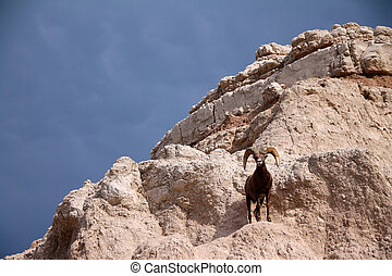 View of Badlands panorama with Bighorn sheep