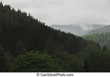 View of Carpathian mountains and forest with fog