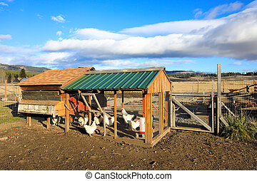 View of chicken coop in a small farm.