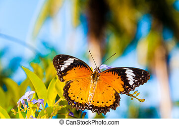 View of Colorful Orange butterfly in summer time