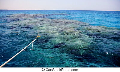 View of coral reef