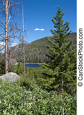 Cub lake in Rocky Mountains National Park, Colorado