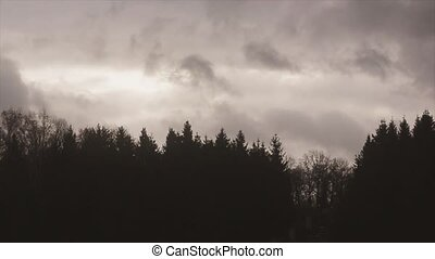 View of dark grey sky above forest in evening. Flying clouds. Nature. Landscape