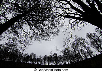 dark silhouettes of trees