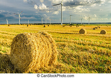 View of electric windmills in summer