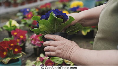 View of florist caresing about flower seedlings, tearing...