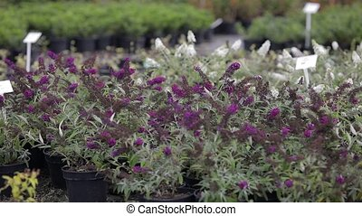 View of flower seedlings in the greenhouse