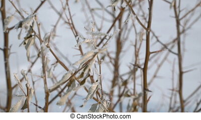 View of frozen dry leaves. Winter picture. Selective focus
