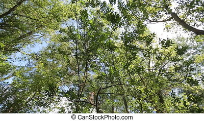 View of green foliage of trees in the forest