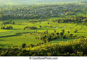 View of green rice field in the morning