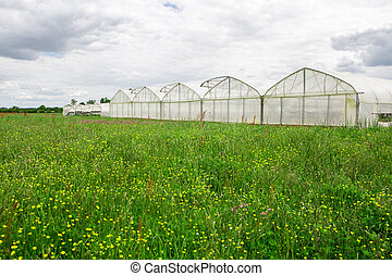 View of greenhouses in the countryside