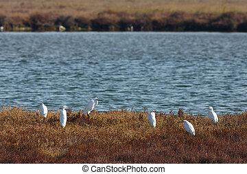 View of herons in Evros river, Greece.