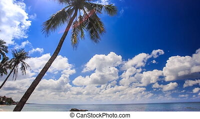 View of High Palm against White Clouds Motion Sea
