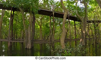 View of high wooden bridge over the lake and forest. Cambodia